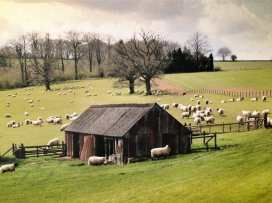 Chestnut Barn - Cotswolds - 988769 - thumbnail photo 20
