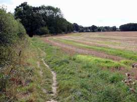 South Cottage - Kent & Sussex - 988958 - thumbnail photo 21