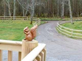 Squirrel Lodge - 1019186 - photo 8