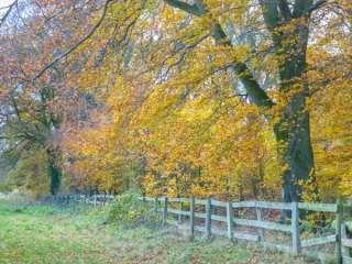 Woodside Cottage - 933359 - photo 9